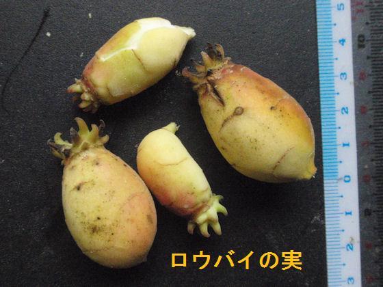 f:id:chuumeikun:20180620022817j:plain