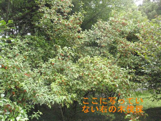 f:id:chuumeikun:20180624015202j:plain