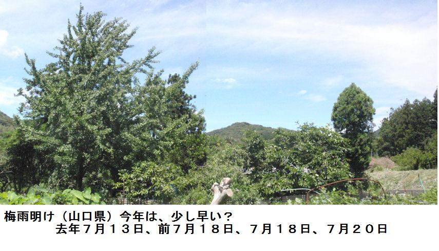 f:id:chuumeikun:20180709194154j:plain