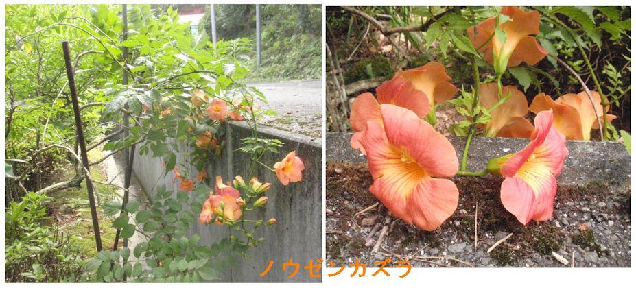 f:id:chuumeikun:20180713192213j:plain
