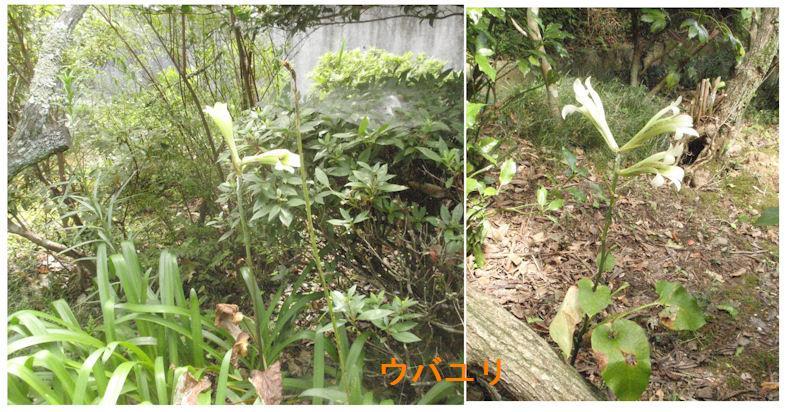 f:id:chuumeikun:20180713192652j:plain