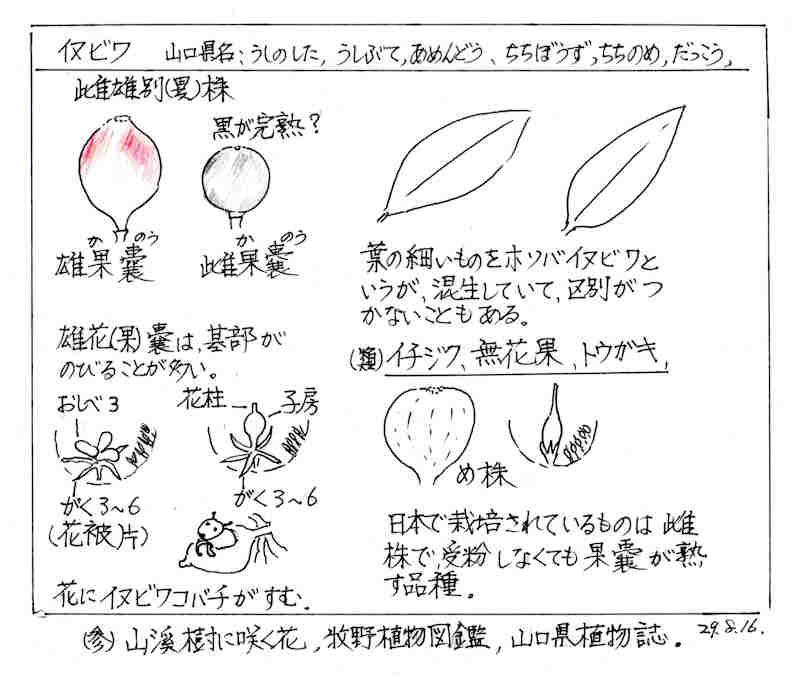 f:id:chuumeikun:20180726205232j:plain
