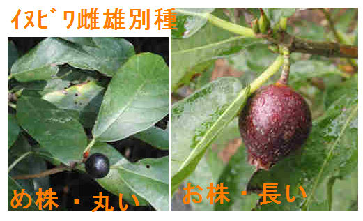 f:id:chuumeikun:20180726205249j:plain
