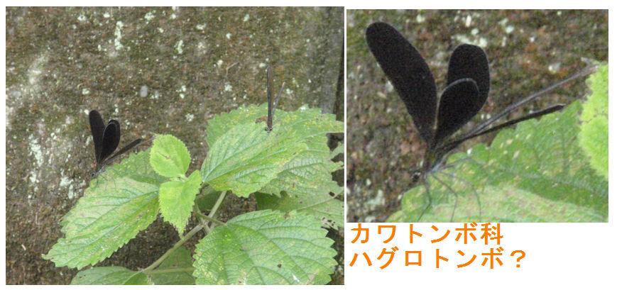 f:id:chuumeikun:20180726205441j:plain