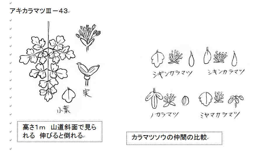 f:id:chuumeikun:20180730223900j:plain