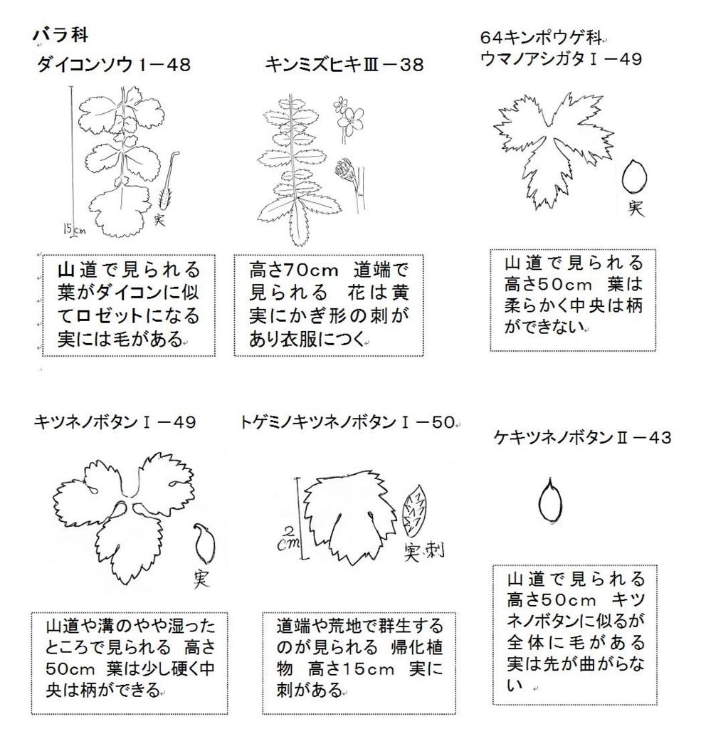 f:id:chuumeikun:20180730224055j:plain