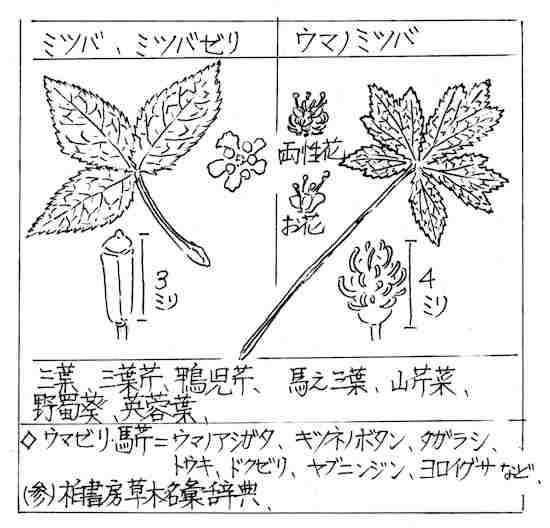 f:id:chuumeikun:20180730224159j:plain