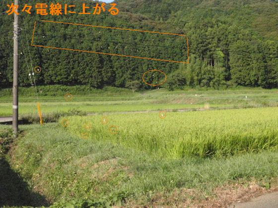 f:id:chuumeikun:20180803063612j:plain