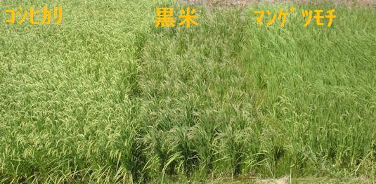 f:id:chuumeikun:20180808191011j:plain