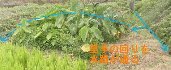 f:id:chuumeikun:20180809203814j:plain