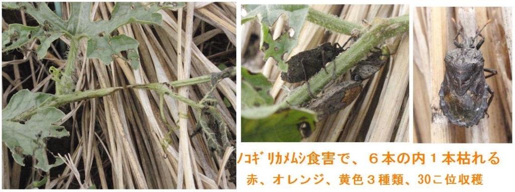 f:id:chuumeikun:20180818043520j:plain