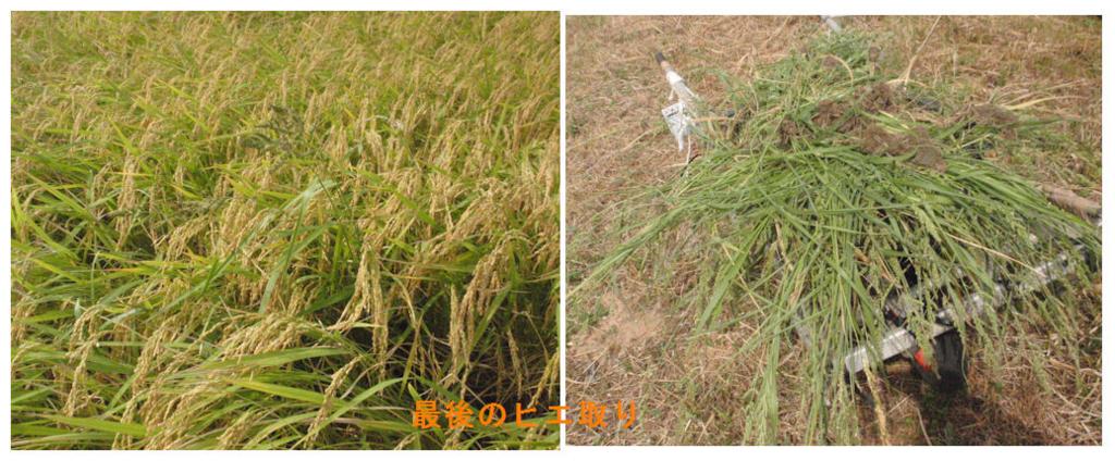f:id:chuumeikun:20180826004346j:plain