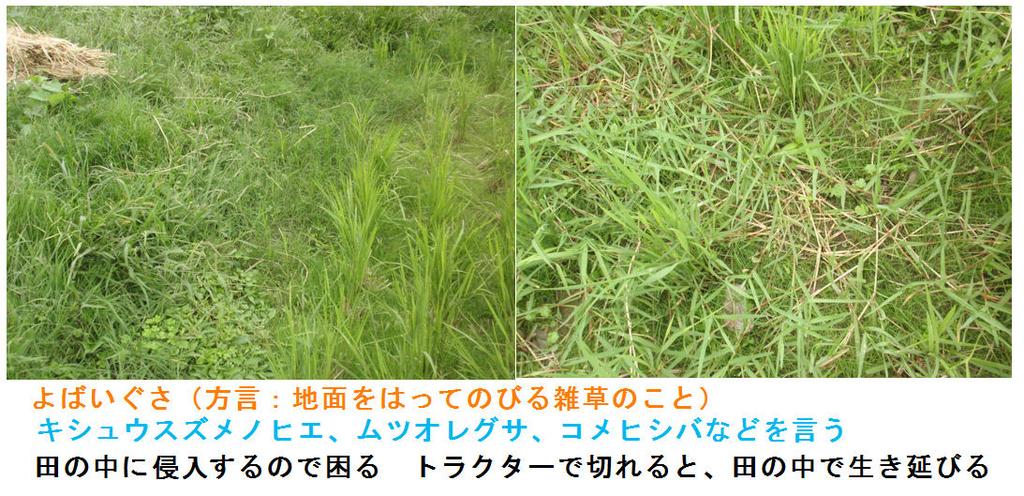 f:id:chuumeikun:20180925003255j:plain