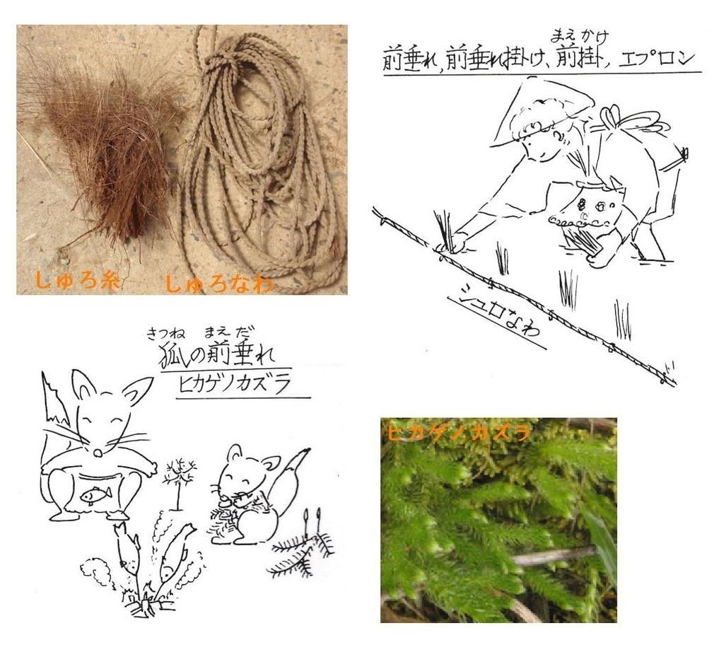 f:id:chuumeikun:20181001163639j:plain