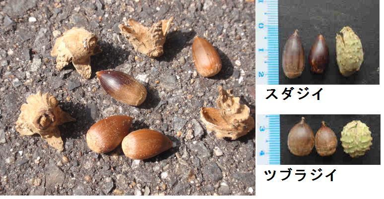 f:id:chuumeikun:20181018120153j:plain