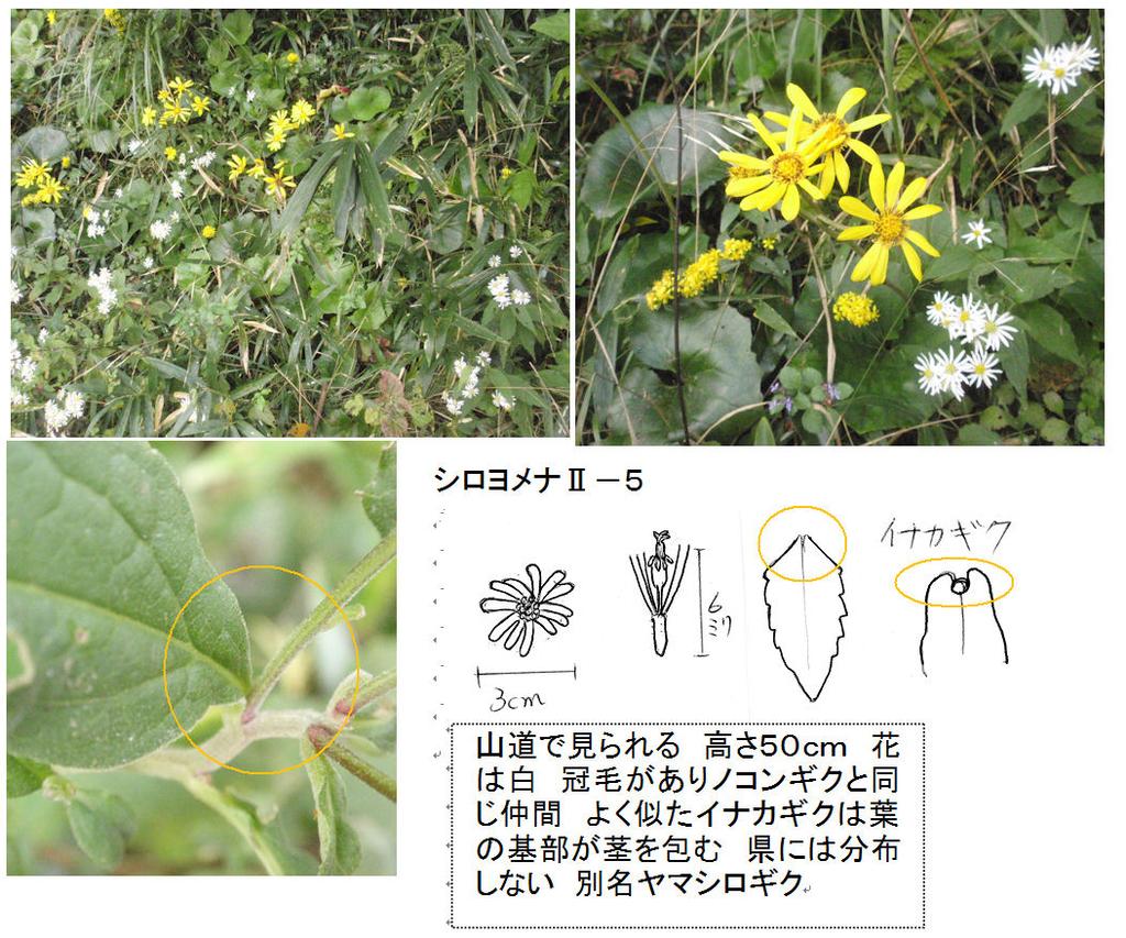 f:id:chuumeikun:20181031150522j:plain
