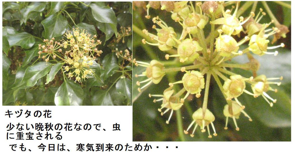 f:id:chuumeikun:20181101195941j:plain