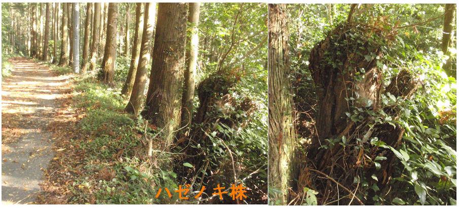 f:id:chuumeikun:20181110212943j:plain