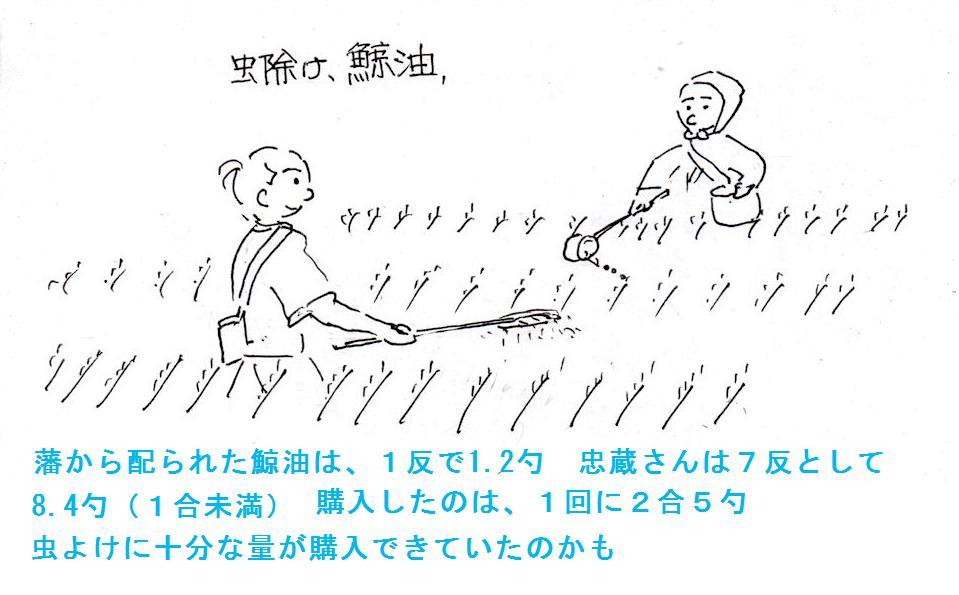 f:id:chuumeikun:20181113213227j:plain