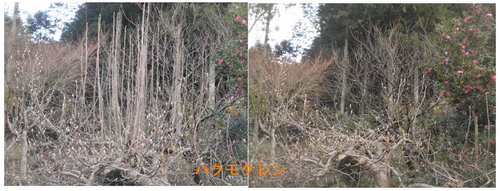 f:id:chuumeikun:20190107044754j:plain