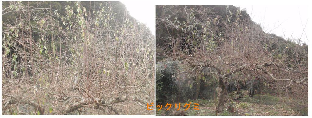 f:id:chuumeikun:20190107044812j:plain