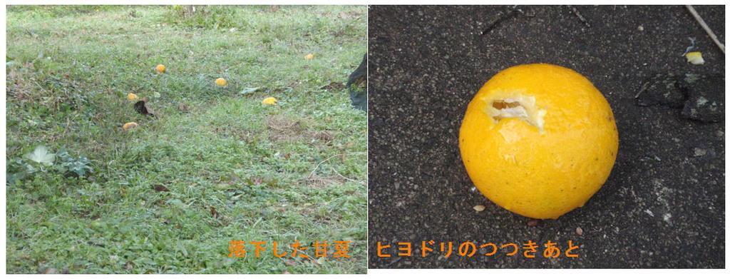 f:id:chuumeikun:20190113015519j:plain