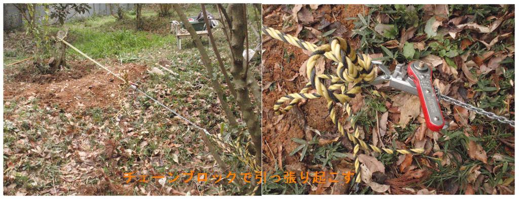 f:id:chuumeikun:20190113015841j:plain