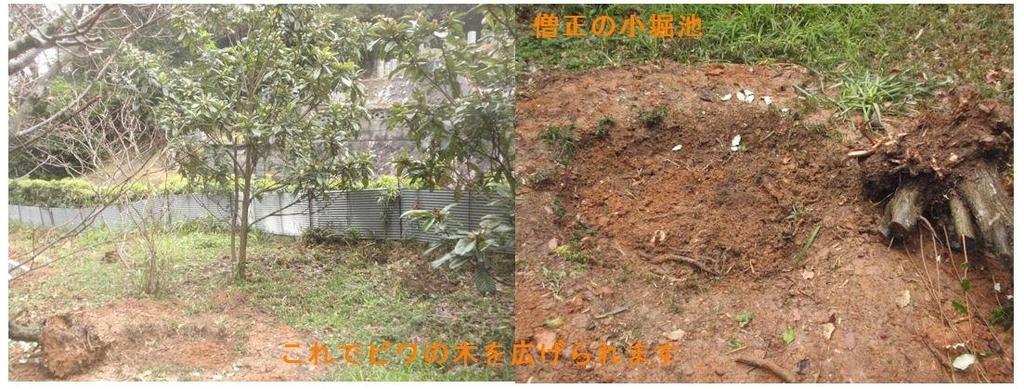 f:id:chuumeikun:20190113020128j:plain