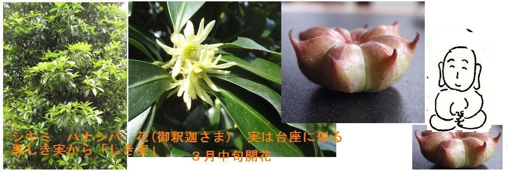 f:id:chuumeikun:20190114075445j:plain