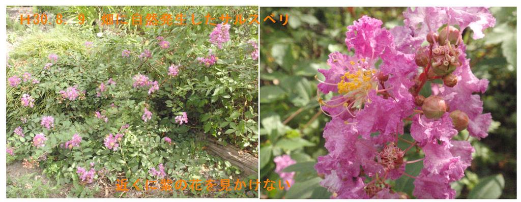 f:id:chuumeikun:20190114075638j:plain