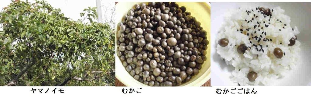 f:id:chuumeikun:20190129202908j:plain