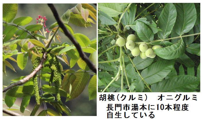 f:id:chuumeikun:20190212001859j:plain