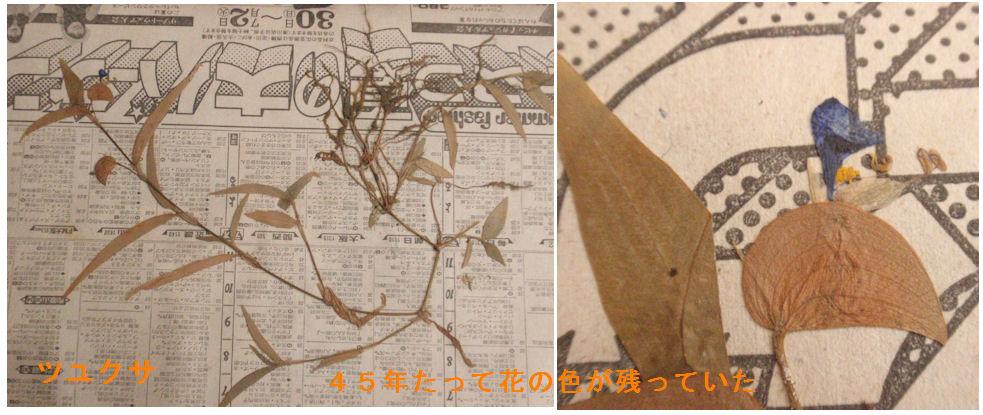 f:id:chuumeikun:20190319021731j:plain