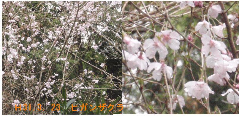 f:id:chuumeikun:20190323173202j:plain