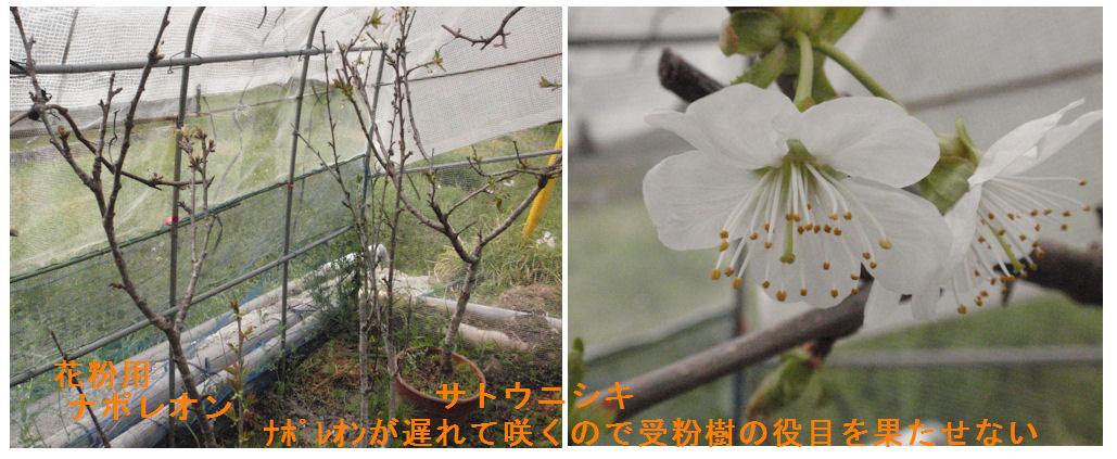 f:id:chuumeikun:20190414214132j:plain