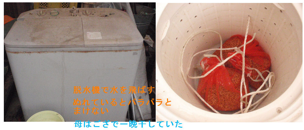 f:id:chuumeikun:20190415123920j:plain