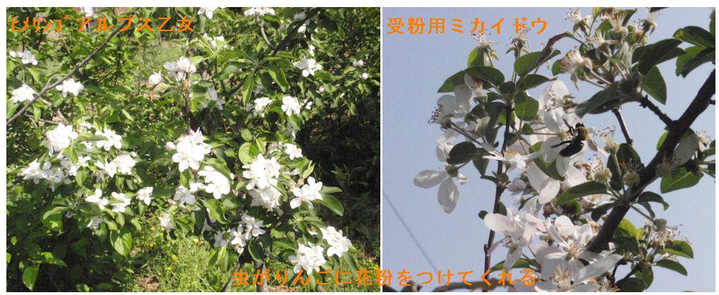 f:id:chuumeikun:20190423042621j:plain