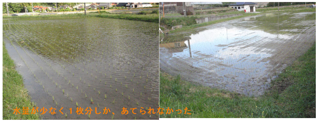 f:id:chuumeikun:20190521055203j:plain