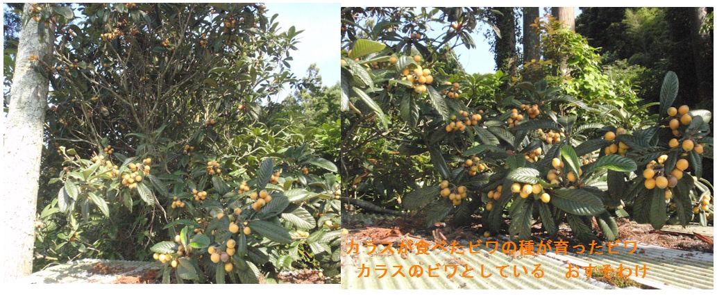 f:id:chuumeikun:20190618011312j:plain