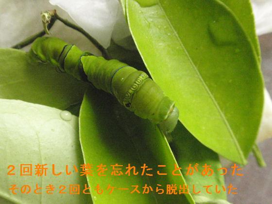 f:id:chuumeikun:20190620071151j:plain