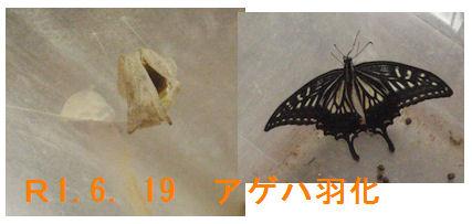 f:id:chuumeikun:20190620071821j:plain