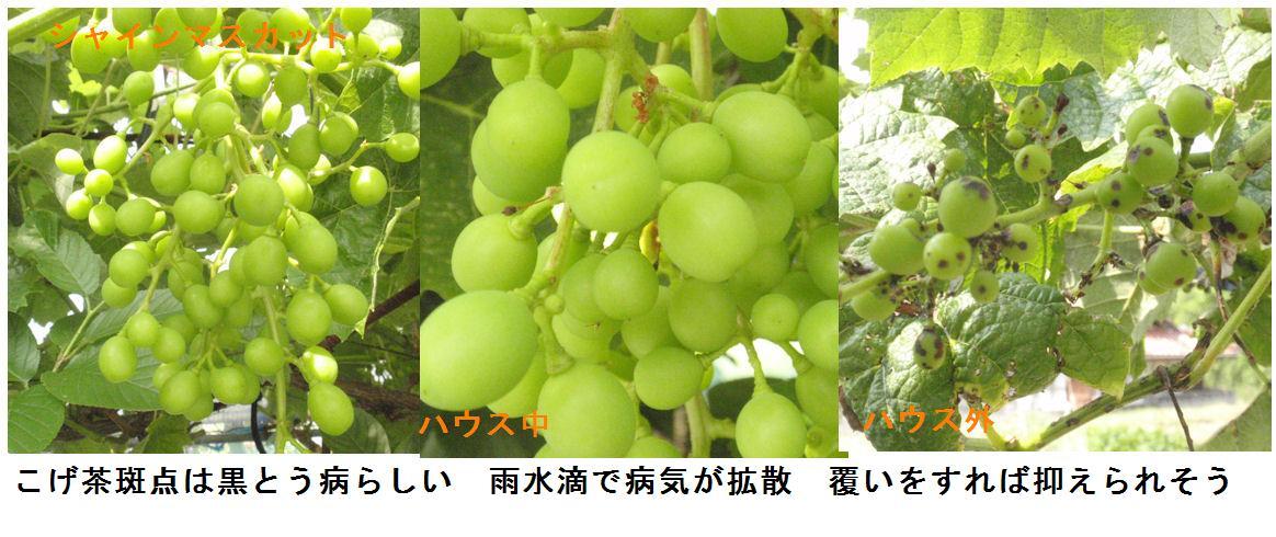 f:id:chuumeikun:20190622010849j:plain