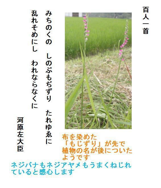 f:id:chuumeikun:20190710021716j:plain