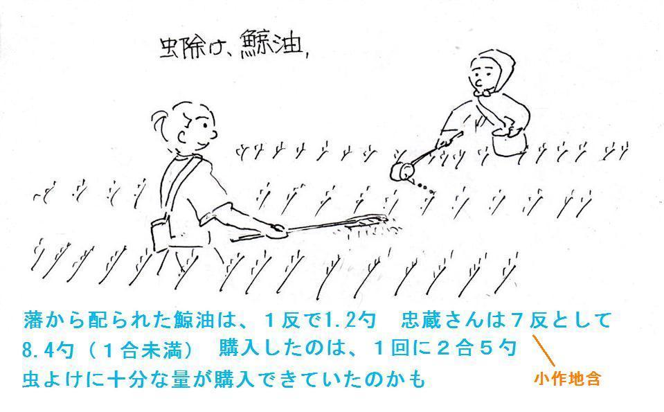 f:id:chuumeikun:20190715075511j:plain