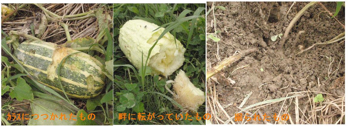 f:id:chuumeikun:20190725054606j:plain