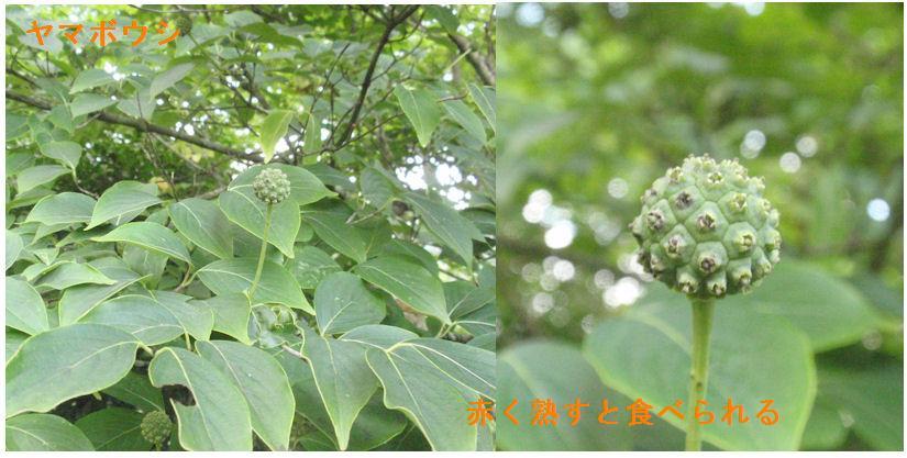 f:id:chuumeikun:20190726051104j:plain