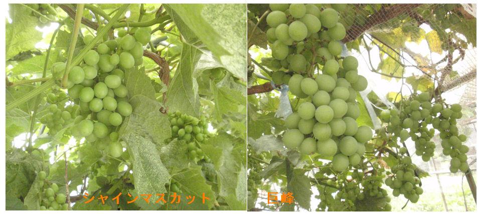 f:id:chuumeikun:20190729164609j:plain