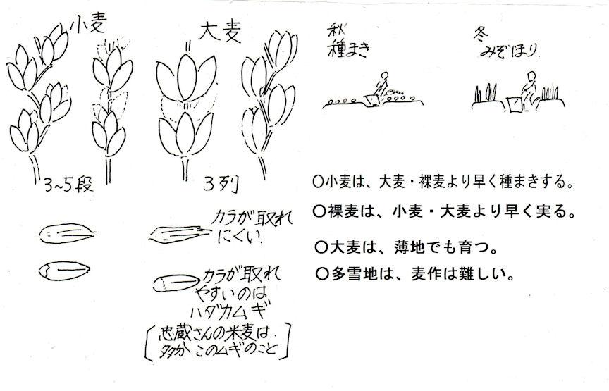f:id:chuumeikun:20190731233613j:plain