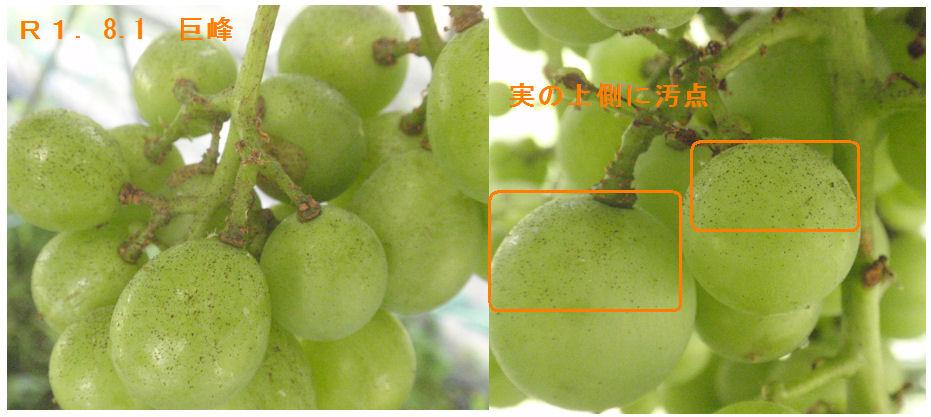 f:id:chuumeikun:20190801193818j:plain