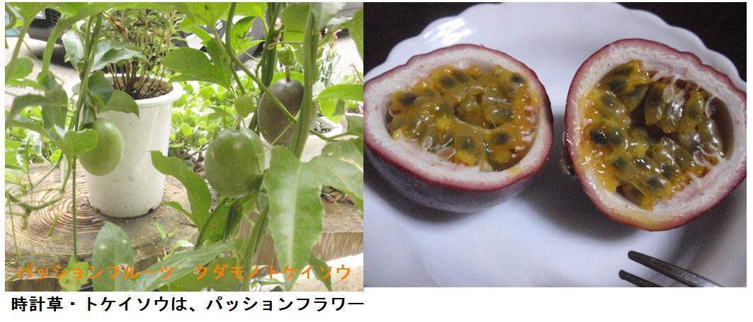 f:id:chuumeikun:20190802015740j:plain